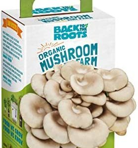Back to the Roots Organic Mini Mushroom Grow Kit, Harvest Gourmet Oyster Mushrooms In 10 days, Top Gardening Gift, Holiday Gift, & Unique Gift