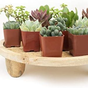Leaf & Linen | Classic Collection Assorted Varieties of Indoor Live Succulent Plants Hardy & Easy Care, Set of 12,