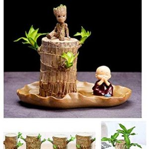 Brazilwood Hydroponic Plants Groot Lucky Wood Potted,Hydroponic Tree Stump,Air Purifying Indoor,Free Gift (Flower Pot, Groot, Little Monk)