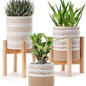 Very cute Set of 3 small stoneware pots with two plant stands - two pots are 5.75