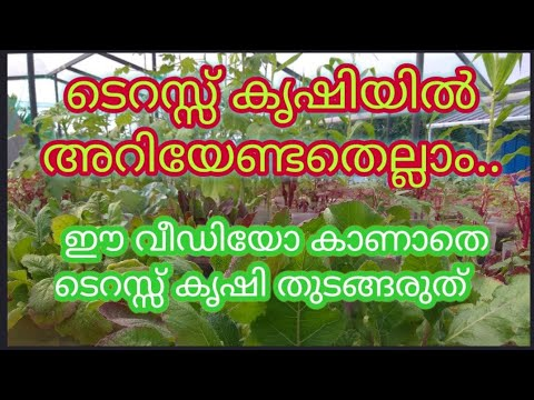 Terrace Vegetable Garden Designs, Ideas and Planting Tips for Organic Farming
