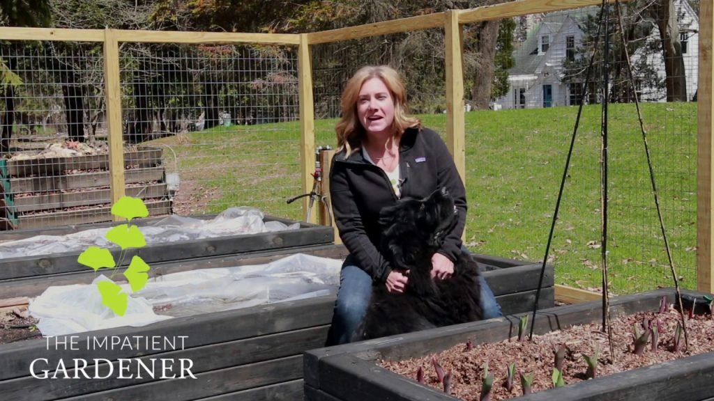 A path for the vegetable garden | The Impatient Gardener