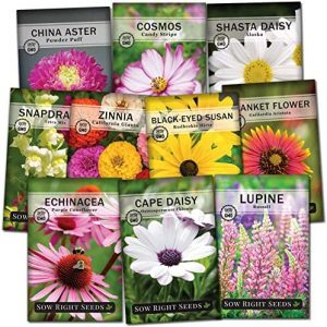 Sow Right Seeds - Flower Garden Seed Collection - Coneflower, Snapdragon, Zinnia, Cosmos, Cape Daisy, Aster, Lupine, Black-eyed Susan, Shasta Daisy, and Blanket Flower; Heirloom Seeds for Planting