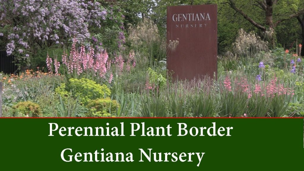 Perennial Garden Borders - Planting Ideas and List