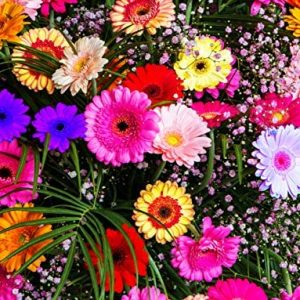 50Pcs Mixed Gerbera Daisy Seeds Hybrids Flower
