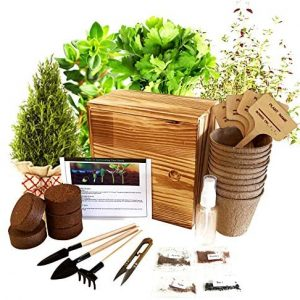Hand-Mart 4 Herb Seeds Complete with Wood Planter Starter Kit Grow Indoor, Basil Parsley Rosemary Thyme, Including Soil, Pots, 3 Garden-Tool, Pruner, Sprayer, Plant Labels, Wood Box. Great Gift.