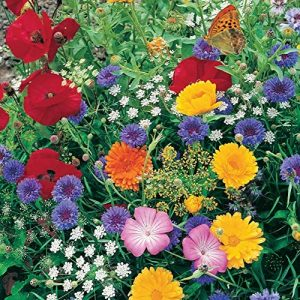 Roll Out Flower Seeded Mats That Attract Butterflies - Set of 2, Butterfly