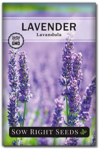 Sow Right Seeds - Lavender Seeds for Planting; Non-GMO Heirloom Seeds with Instructions to Plant and Grow a Beautiful Indoor or Outdoor herb Garden; Great Gardening Gift