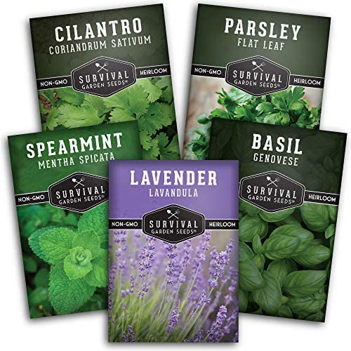Survival Garden Seeds Herb Collection II Seed Vault - Lavender, Spearmint, Basil, Cilantro, Parsley - on-GMO Heirloom Survival Garden Seeds for Planting - Grow Herbs Indoors Year Round