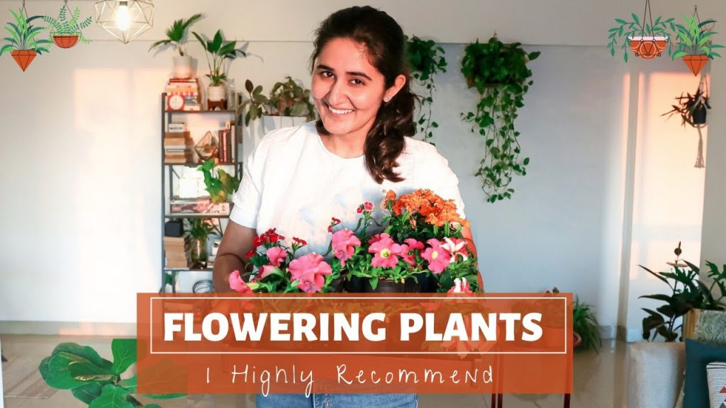Best Flowering Plants for Indoors and Outdoors & their complete care