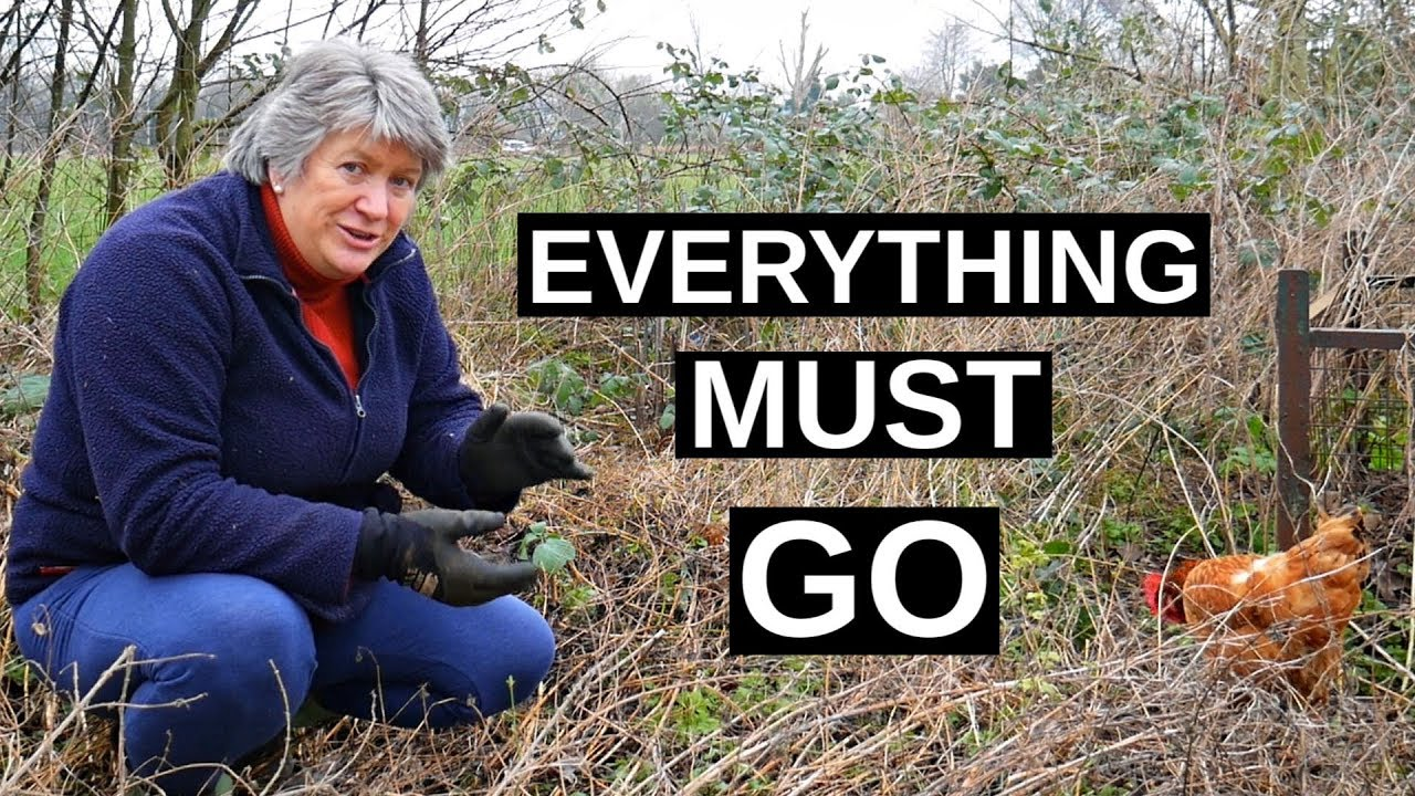 EASY How To Clear Perennial Weeds (at the Allotment or No Dig Garden)