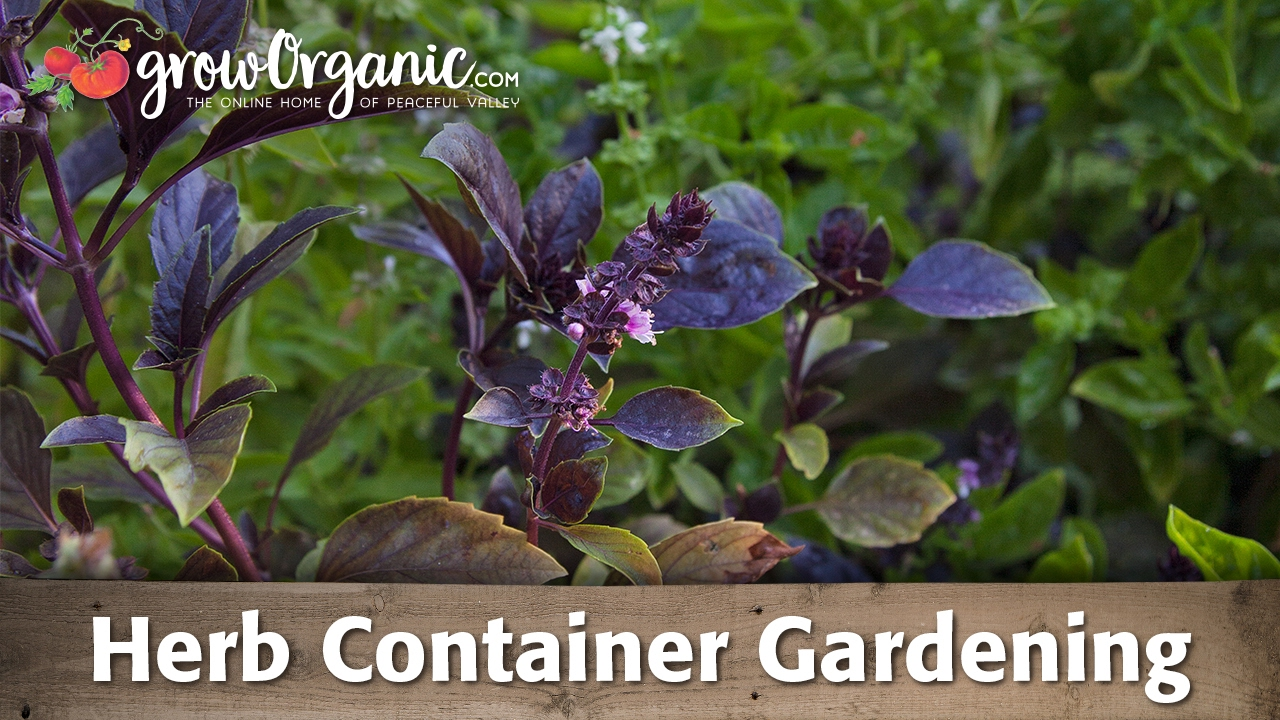 How to Plant and Herb Garden in a Container