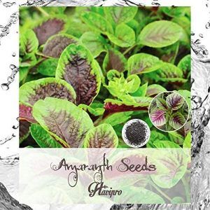 ALEXI Amaranth Seeds - Amaranth Seeds for Planting - Red Green Leaf - Chinese Spinach Amaranth Seeds - Rau Den Seeds - HIGH Germination Rate - HIGH Yield - Non GMO (505)