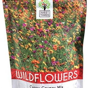 Crazy Cosmos Wildflower Seeds Mixture (All Colors) - Bulk 1/4 Pound Bag - Over 20,000 Seeds - Pink, Yellow, Orange, Red, Purple and White Mixed Species!