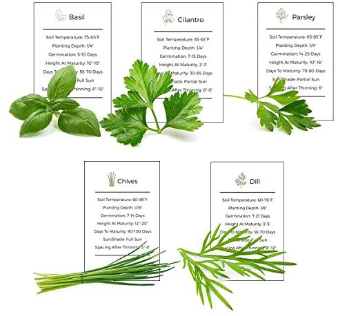 Environet Herb Garden Seeds Collection - 5 Culinary Herb Seeds Pack - Basil, Parsley, Cilantro, Chives and Dill Seeds, Heirloom Seeds for Planting