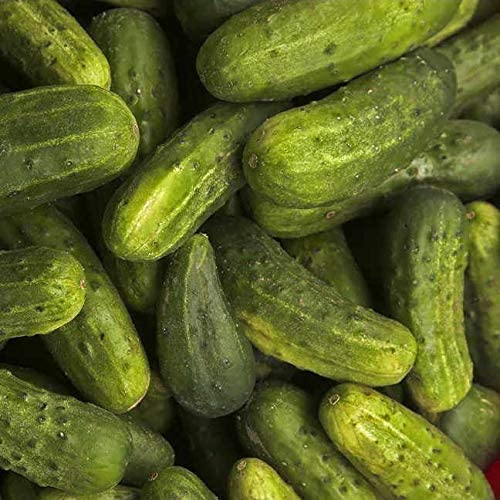 National Pickling Cucumber Seeds for Planting 1 Gram, Non-GMO, American Seeds, Heirloom, Cucumis sativus