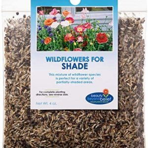 Partial Shade Wildflower Seeds Bulk - Open-Pollinated Wildflower Seed Mix Packet, No Fillers, Annual, Perennial Wildflower Seeds Year Round Planting - 4 oz