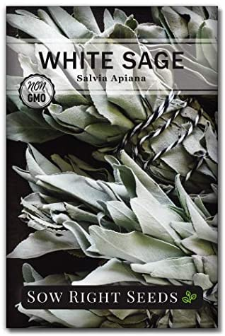 Sow Right Seeds - White Sage Seed to Plant - Non-GMO Heirloom Seeds - Full Instructions for Planting and Growing, Indoors or Outdoor; Great Gardening Gift (1)