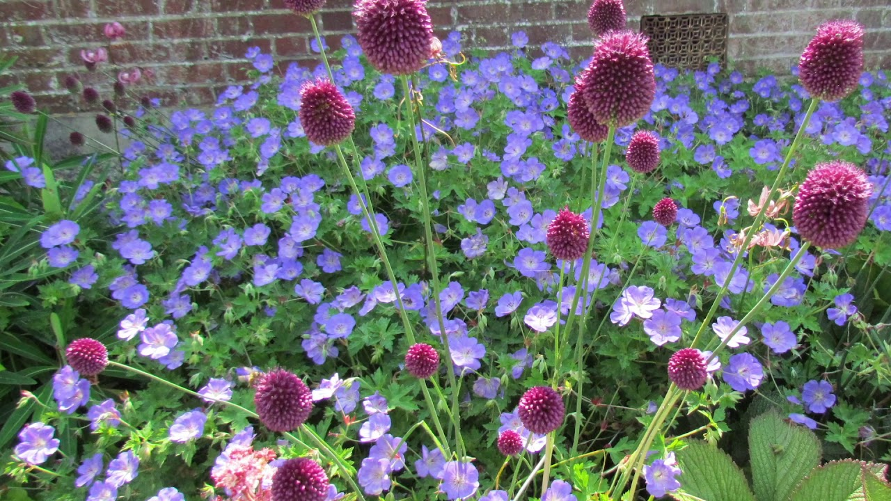 Top tips for designing a new border