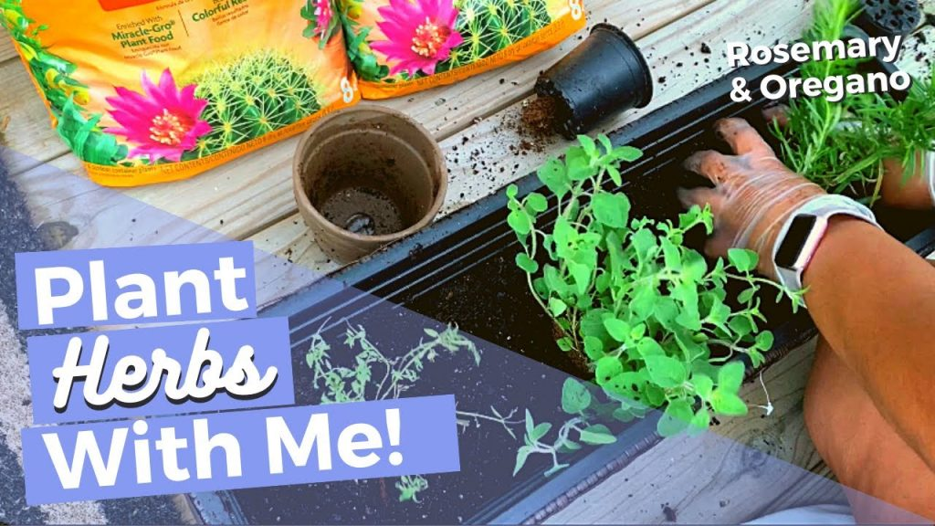 DIY Herb Gardening in Containers for Beginners | How To | Planting Thyme | Oregano | Rosemary
