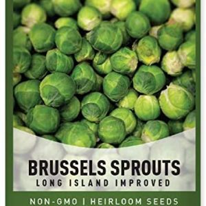 Brussels Sprouts Seeds for Planting - Long Island Improved Heirloom, Non-GMO Vegetable Variety- 800 mg Approx 225 Seeds Great for Summer, Fall, and Winter Gardens by Gardeners Basics