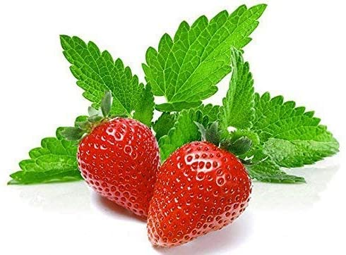 100+ Strawberry Mint Herb Seeds Non-GMO Fragrant Rare! US Grown!