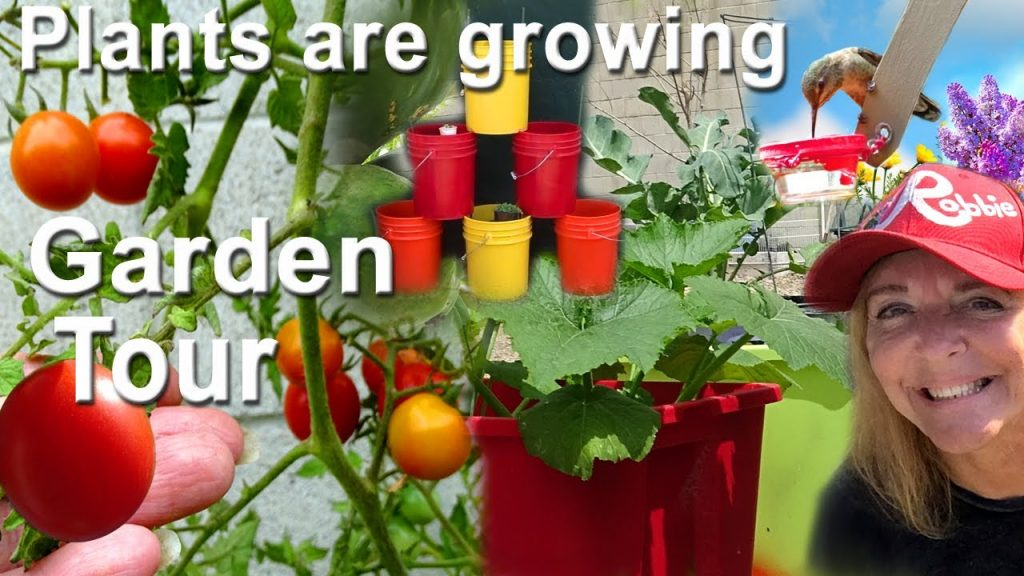 Vegetable Garden Tour Seeds Growing Tomatoes, Cucumbers, Herbs & More Container & Vertical Gardening