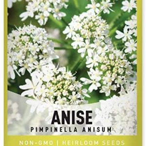 Anise Seeds for Planting is A Heirloom, Non-GMO Herb Variety- Pimpinella Anisum Herb Seeds Great for Indoor and Outdoor Gardening by Gardeners Basics