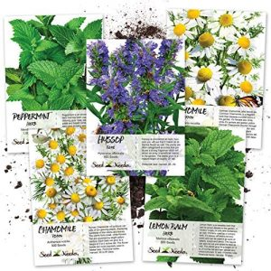 Seed Needs Medicinal Herb Seed Collection (5 Individual Packets) Fresh, Non-GMO, Untreated