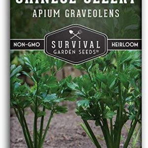Survival Garden Seeds - Chinese Celery Seed for Planting - Packet with Instructions to Plant and Grow in Your Home Vegetable Garden - Non-GMO Heirloom Variety