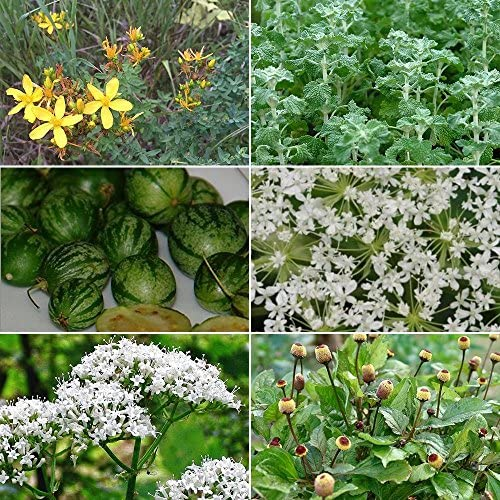 Medicinal Herb Garden Seed Collection #9 - A 6 Variety Pack of Rare Medicinal Herb Seeds! FROZEN SEED CAPSULES - The Very Best in Long-Term Seed Storage - Plant Seeds Now or Save Seeds for Years