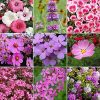UtopiaSeeds Pink Wildflower Seed Mix - Attracts Hummingbirds and Butterflies - Easy to Grow