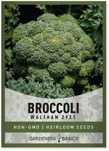 Broccoli Seeds for Planting is A Great Heirloom, Non-GMO Vegetable Variety- 330 Seeds Great for Outdoor Spring, Winter, and Fall Gardening by Gardeners Basics